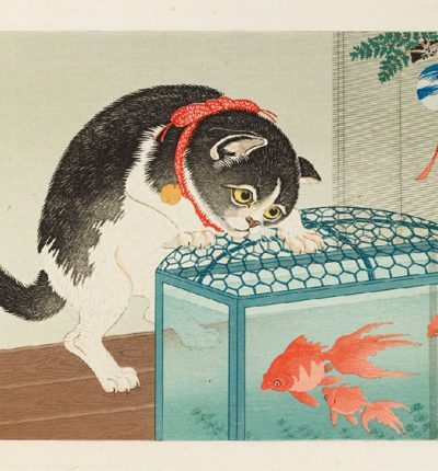 Cat-and-Goldfish